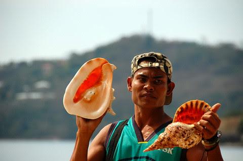 He sells seashells