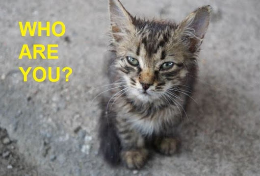 What to do When You Find a Lost Cat on The Street? - Pets Care