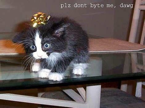 lolcats top  lol cats