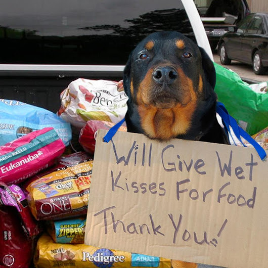 Pallets of Pet Food for American Shelters