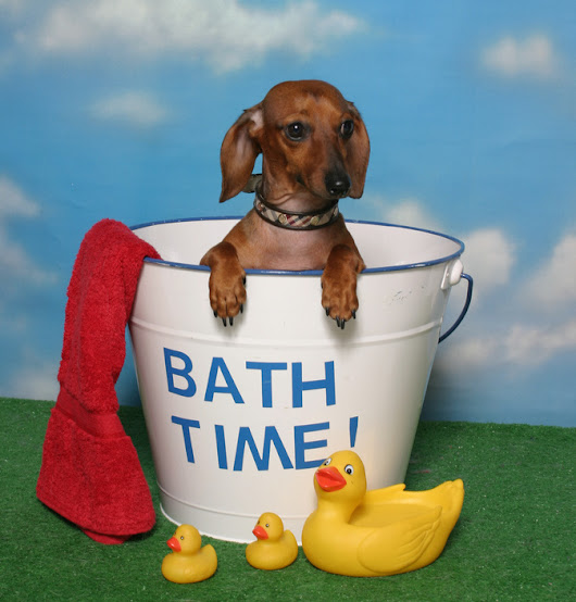 Dog Washing – How to Bathe Your Dog