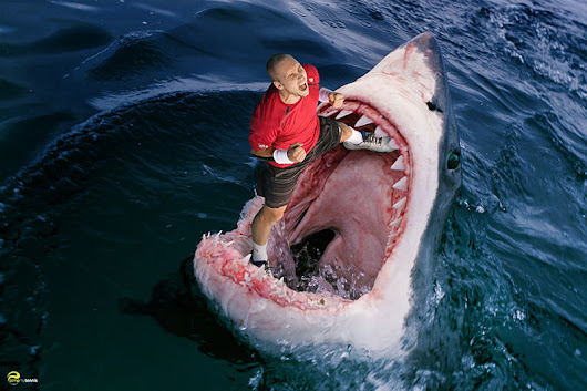 Steve Darcis Revenge of the The Shark