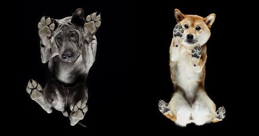 Photos of Dogs from Directly Below