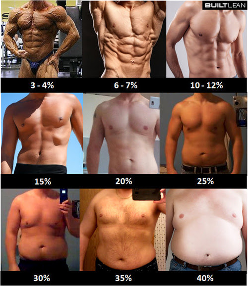 body fat percentage chart bodybuilding.com