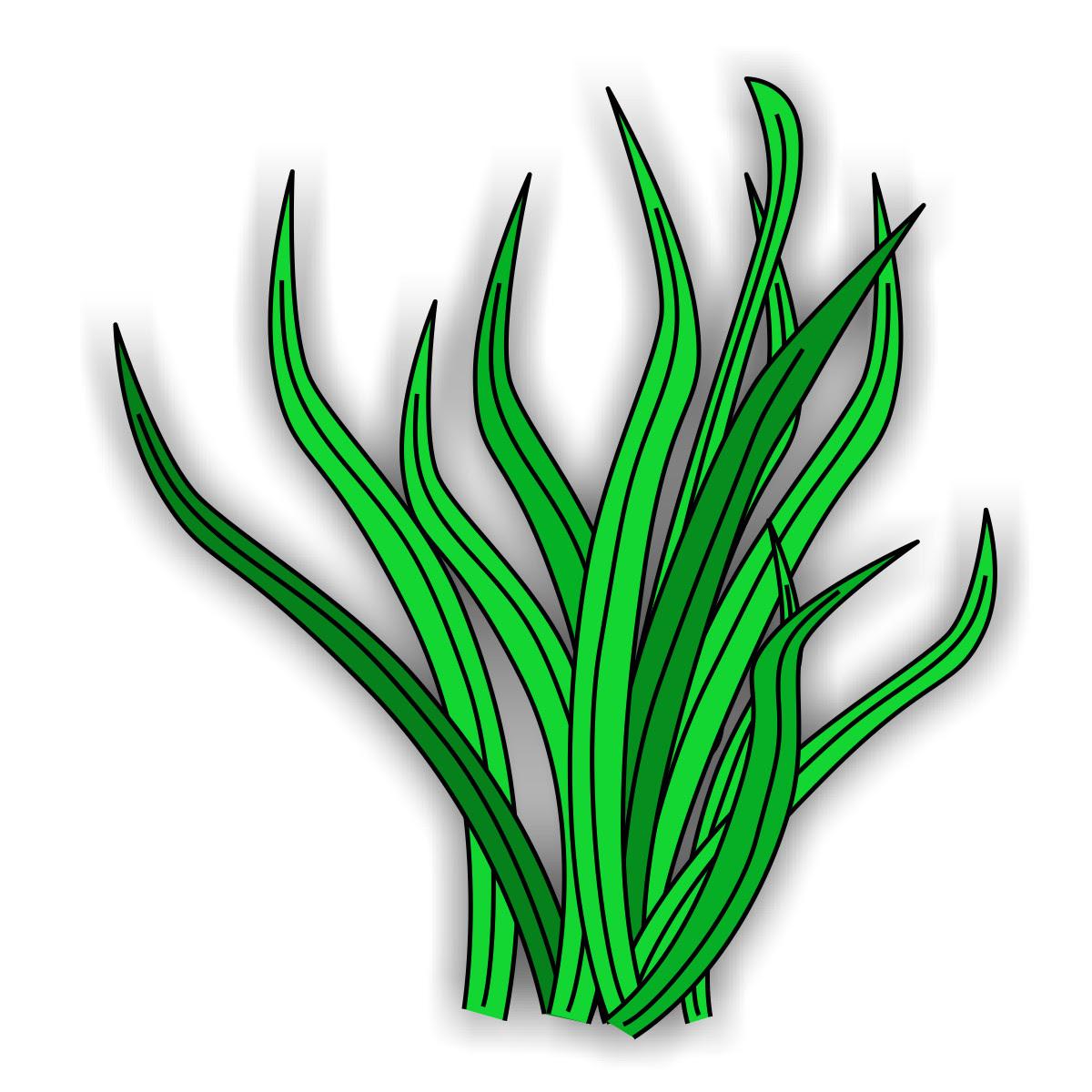 wasserpflanzen zum ausmalen  vorlagen zum ausmalen gratis