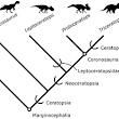A Ceratopsian Dinosaur from the Lower Cretaceous of Western North America, and the Biogeography of Neoceratopsia