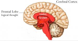 Mengapa saya tertarik mendalami dan menyebarkan Gentle Birth Birth Trauma- Sistem Limbic dan kondisi mental