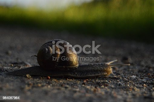 Snail on a country road