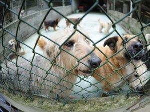 Abandono de cães cresce com proximidade das férias de fim de ano, apontam protetoras (Foto: Raul Zito/G1)
