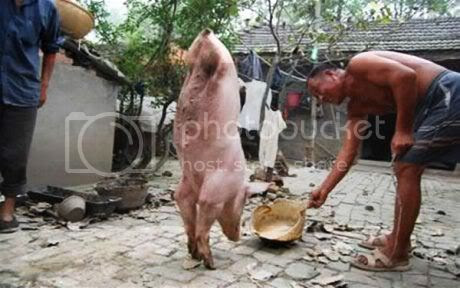 The 2-legged Pig Called Zhu JianQiang
