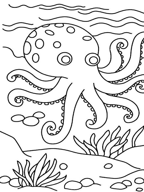 Get Inspired For Octopus Coloring