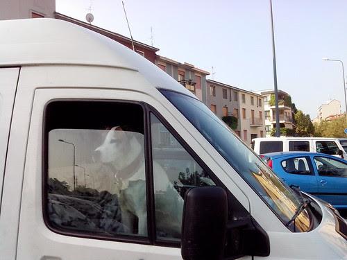 Un cane sul furgone by Ylbert Durishti