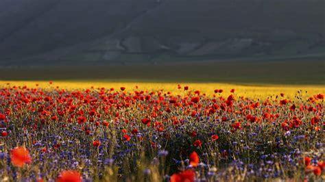Italia italy castelluccio di norcia flowers landscapes