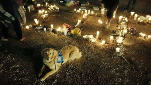 Therapy dogs comfort survivors of Las Vegas shooting - ABC News