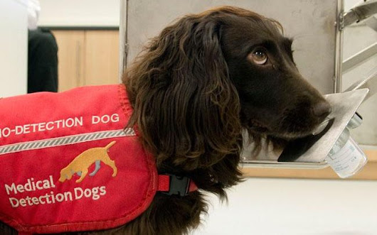 Dogs could sniff out Parkinson's disease years before symptoms appear