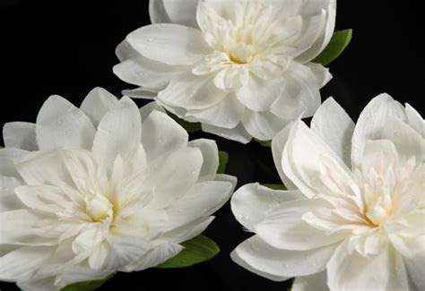 """12 Floating White Lotus Flowers with Rain Drops 7"""""""