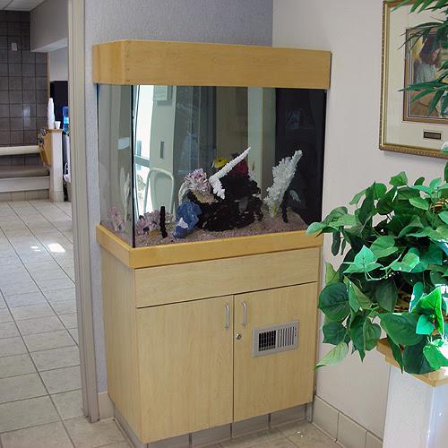 Tropical Dreams - Aquarium Design and Maintenance for the Phoenix area