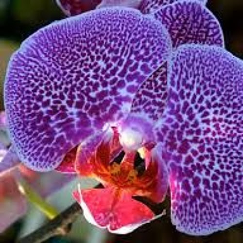 Orchids by Jim Bauerlein