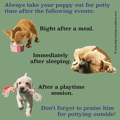 Potty Training a Puppy in a Week