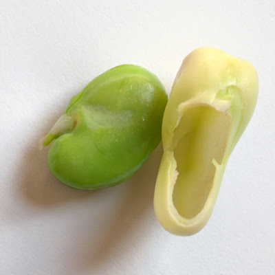 broad bean and skin