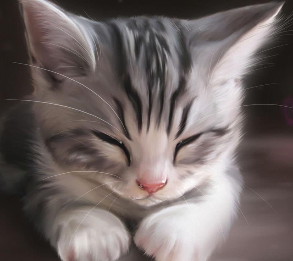 かわいい三毛猫 スマホ壁紙 Wallpaperbox