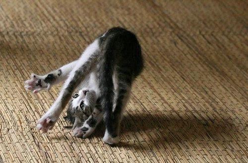 funny_cats_49 (500x329, 106Kb)
