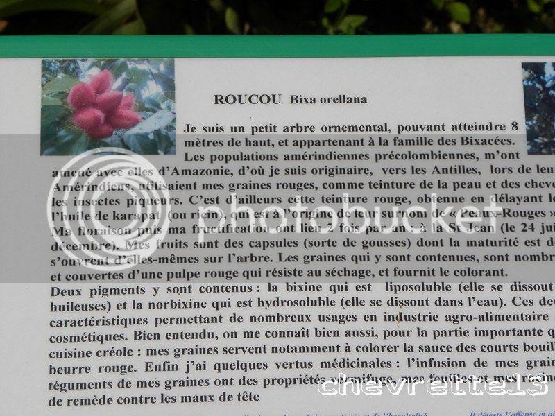 http://i1252.photobucket.com/albums/hh578/chevrette13/Guadeloupe/DSCN6478Copier_zpsa10a3ec5.jpg