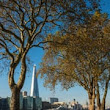 Introducing 'treeconomics': how street trees can save our cities | Cities | The Guardian