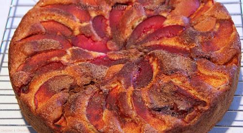 Nectarine & Plum Sponge Cake 2