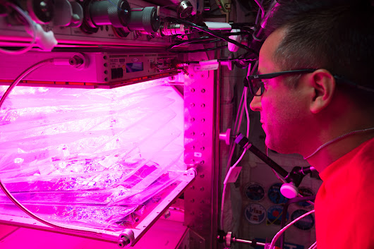 It's Planting Season on the International Space Station