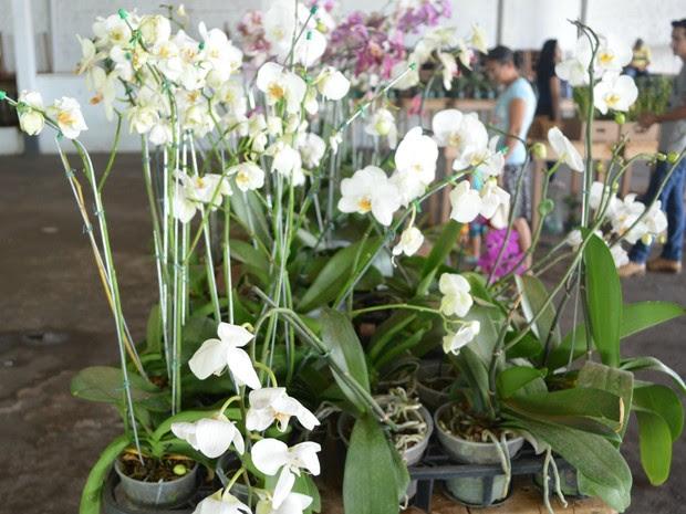 Exposição de flores em Cacoal (Foto: Rogério Aderbal/G1)