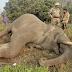 कॉर्बेट पार्क से निकलकर आए हाथी की करंट से मौत