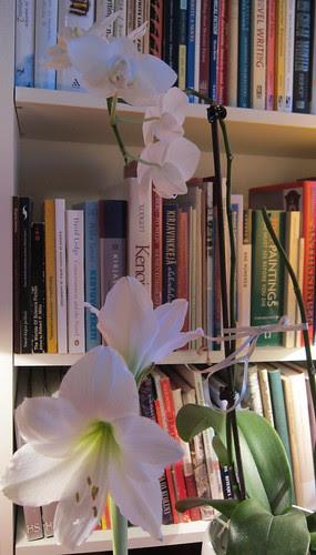 Amaryllis ja orkidea 2013 by Anna Amnell
