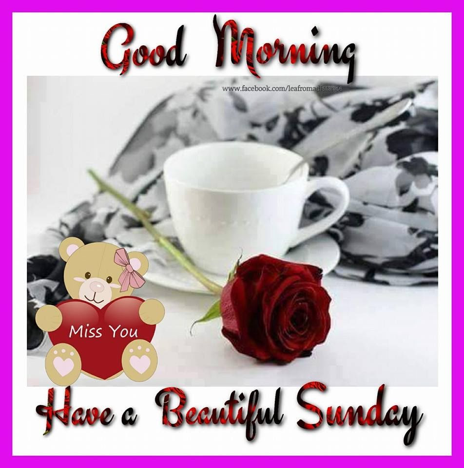 Red Rose Good Morning Beautiful Sunday Pictures Photos And Images