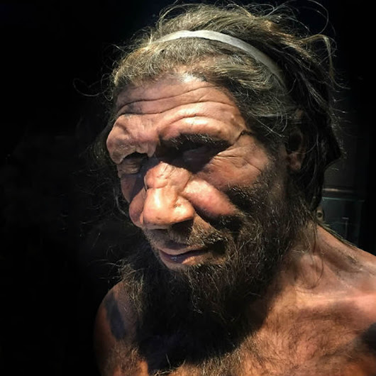 Compassion Helped Neanderthals Survive