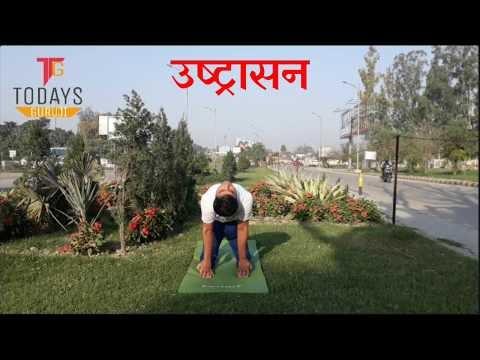 उष्ट्रासन  camel pose  ustrasana yoga pose  https//www