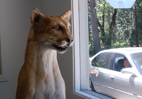 big cat greets visitors!.jpg