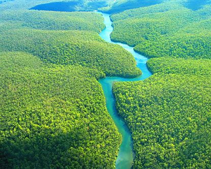 Amazon Rain Forest, South America I want to experience the rain forest!