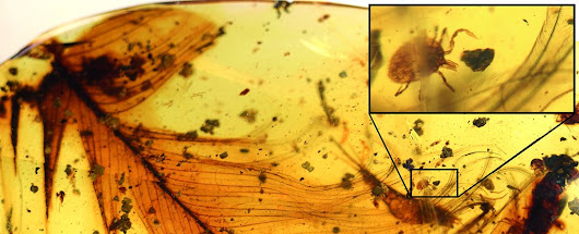 We Have The First Direct Evidence That Ticks Really Did Feast on Dinosaur Blood