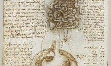 Da Vinci Digestive System