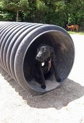 DogPark_Izzy_6912