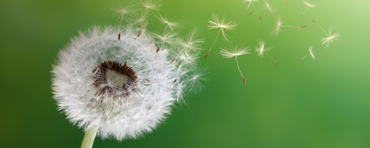 Acupuncture Soothes Allergies & Sinus | Community Supported Acupuncture of Louisville