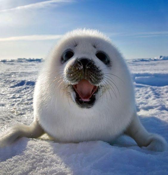 10 Super Happy Animals