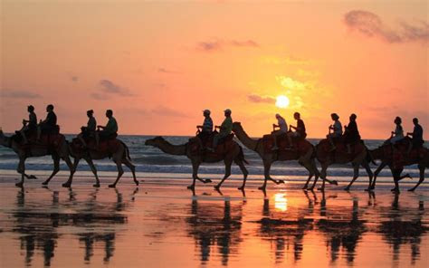 hd sunset camel rides broome western australia wallpaper