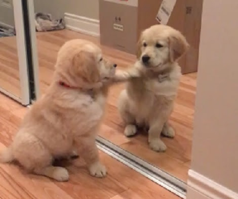 This Adorable Pup Has Just Discovered The Magical Mirror For The First Time!