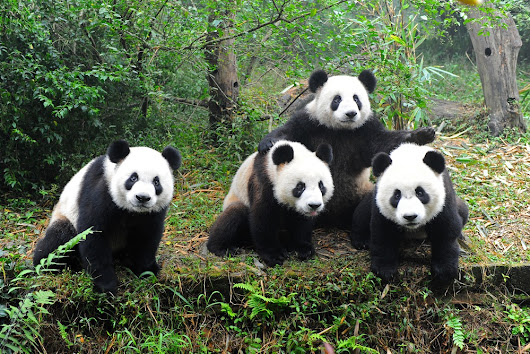Ask the Experts: What's Changed After Panda 4.0? | SEJ