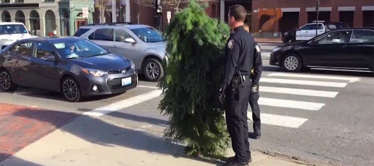 Why would the police arrest a man dressed as a tree? - Hip Daily