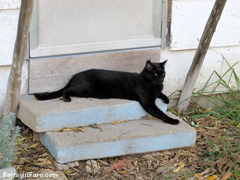 (24-8) Mr. Midnight relaxing on the steps of The  Shack (where he and Kit Kat still live) - FarmgirlFare.com