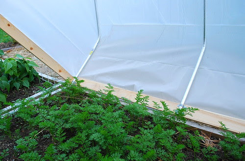 opening mini hoop house