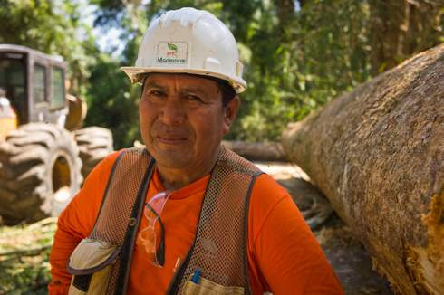 How cutting down trees can save the Amazon